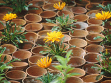 Gazania in Pots with Empty Pot Design  Whichford Pottery Chelsea Flower Show 1997