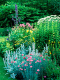 Large Cottage Style Garden  with Colourful Herbaceous Borders