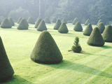Yew Topiary Parnham House  Dorset