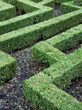 Box Maze Hedging with Paths  Bourton House Garden  September