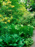 Wiltshire Bog and Woodland Garden with Pond and Lush Foliage