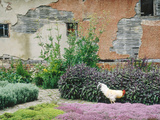 Formal Herb Garden Thyme