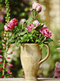 Still Life Outdoors Summer  Unnamed Old Rosa in Jug Digitalis (Foxglove) in Background