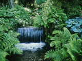 Shallow Waterfall and Stream Shady Planting of Hosta  Fern Fernhill  Ireland (Near Dublin)