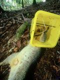 Dead Opossum  Pest Control  New Zealand