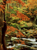 Fall Colour Along Middle Prong of Little River  USA