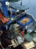 Fishermen Crating up Sardine  Ribeira  Spain