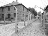 View Between Fencing to Prisoner Block  Auschwitz  Poland