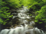 The Middle Prong of the Little River in Late Spring  Tennessee  USA