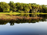 Sabal Palm and Live Oak Forest Lining the Banks of the River  Myakka River State Park  Florida  USA