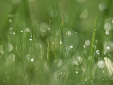 Water Droplets on Grass  Close-up Detail Yorkshire  UK