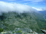 Cloud Formation Over Table Mountain with Rock Hyrax in Foreground  South Africa
