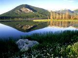 Daisies Along Vermillion Lakes  Alberta  Canada
