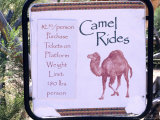 Camel Ride Tours Sign  USA