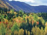 Fall Colours  Park of Gaspesie  Canada