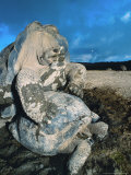 Giant Tortoise  Mating  Isabella Island  Galapagos