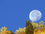 Full Moon  Setting Behind Aspen Trees Gunnison National Forest  Colorado