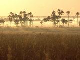 Cerrado Vegetation  Mauritia Vinifera  Emas National Park  Brazil