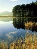 Loch Garten  Strathspey  Scotland
