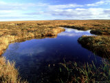 Peatland or Flow Country  Caithness  Scotland