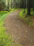 Path Through Woodland  Ross-Shire