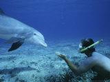 Snorkeler with Bottlenose Dolphin  Caribbean
