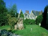 Remaining Stump from Gilbert Whites Famous Yew  Selborne Churchyard