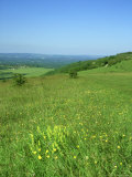 Harting Down  Sussex  UK