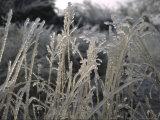 Icy Grass  Boulder