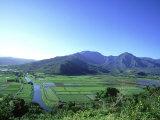 Poi Field  Hanalei  Hawaii