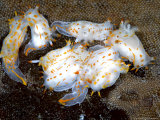 Nudibranch  Group  UK