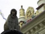 Ape  Nepal