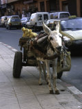 Jackass with Carriage on a Street in Morocco
