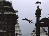 Ape Jumping  Nepal
