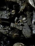 Skulls Amongst Rocks  Indonesia