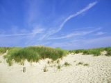 Beach and Dunes with Marram Grass  Dorset  UK