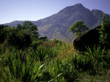Hikers Walk Through Plants with Mountain in Background  Madagascar