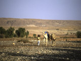 Camels Walking with a Man  Morocco