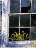 Broken Windowpane