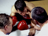Boxer Receiving Advice
