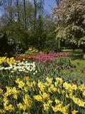 Bed of Tulips  Keukenhof Gardens  Netherlands