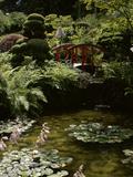 Japanese Garden  Canada