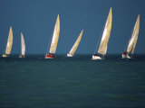 Yacht Race Florida  USA