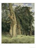 Old Elms in Prater  1831