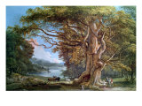 Ancient Beech Tree  1794