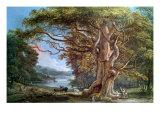 Ancient Beech Tree  1794
