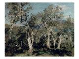 Olives  Corfu  1912