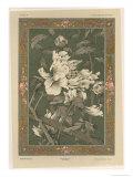 Flowers  Plate 31  Fantaisies Decoratives  Librairie de l'Art  Paris  1887