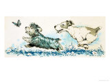 Dogs Chasing a Butterlfly