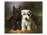 Scottish and a Sealyham Terrier